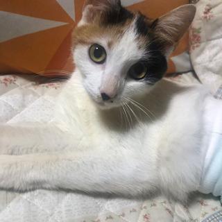 三毛猫の女の子です