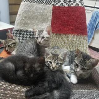 可愛い赤ちゃん猫‼️