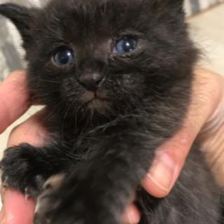 黒猫2020.9.21生まれ
