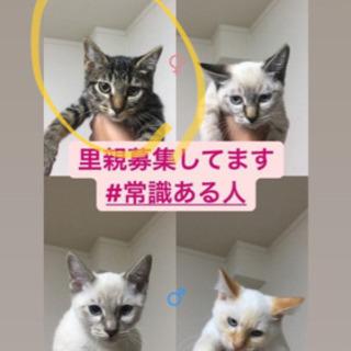生後5ヶ月の子猫