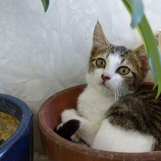 ※里親さん決定しました※3~4ヶ月の美形の子猫 3兄弟