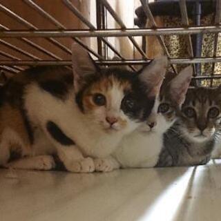生後1ヶ月~2ヶ月未満程の子猫(6匹)