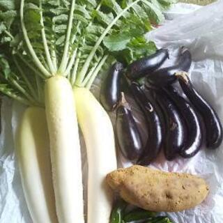 雨の日お野菜4点。
