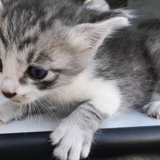 かわいい子猫です!玉野市