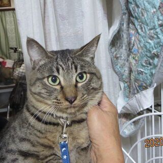 徳島からのレスキュー猫ロク君