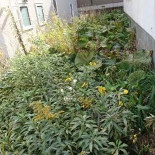 庭の草刈りから不要品処分お手伝い、遺品整理、ゴミの仕分けな…