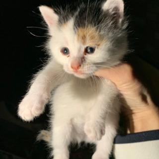 【里親様決定しました♡】野良猫が子猫を産みました!兄と妹たちです...