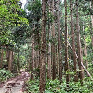 トレラン【距離12km/累積720m】三童子山~鞍掛山スカイトレ...