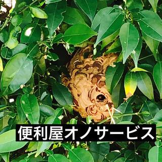 蜂の駆除、ゴキブリ駆除、コウモリなど