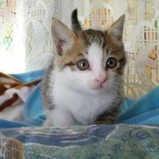 めちゃくちゃに可愛い人が大好きな赤ちゃん猫!