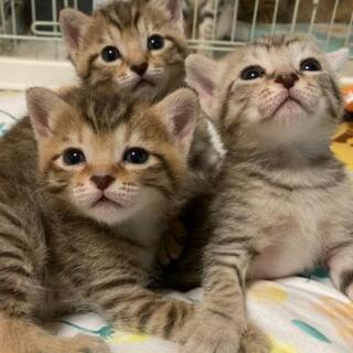 かわいい トラ猫の姉妹