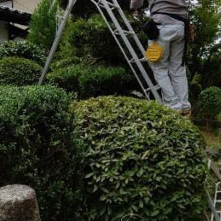 草刈り、剪定、伐採など造園仕事お任せください。