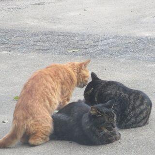 3匹のノラ猫の里親募集
