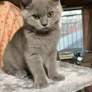 生後5ヶ月猫の里親様を募集しています!