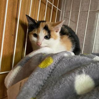 2ヶ月のメス猫ちゃん 里親様決まりました。 - 猫