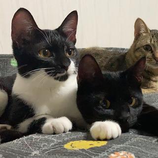 5-6ヶ月の子猫、白黒♀黒猫♂兄妹ですが1匹ずつ可です。