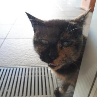 【大至急!!】猫を飼いませんか?