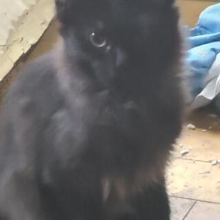 急遽里親募集❗生後半年位の猫様♂♀️6匹
