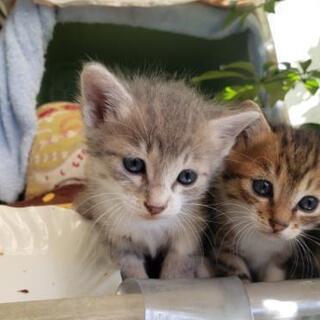 お話中につき受付中止★パステルカラーの赤ちゃん猫★
