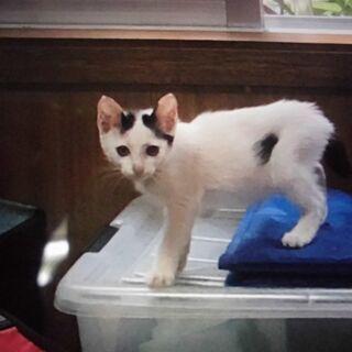 かわいい猫ちゃんの里親さんを募集します‼