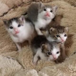 9月14日生まれ子猫