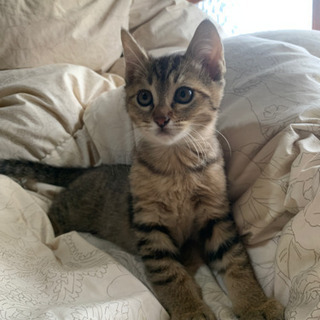 生後2ヶ月の仔猫5匹