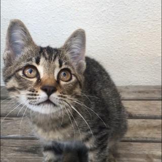 子猫 メス 沖縄県内 里親募集します。