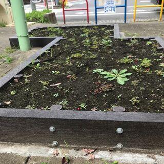 公園花壇を使いたい人,お気軽にご連絡ください♪ − 東京都