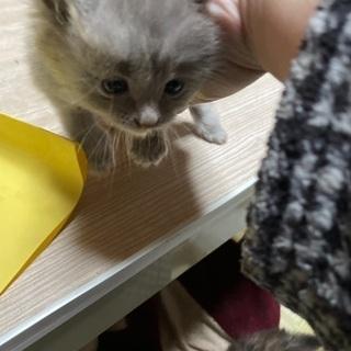 野良猫の仔猫 ⇒ うすい黒 生後1ヶ月弱