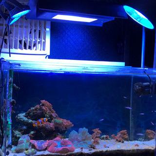 【ネット決済】水槽 サンゴ 海水魚 その他機材