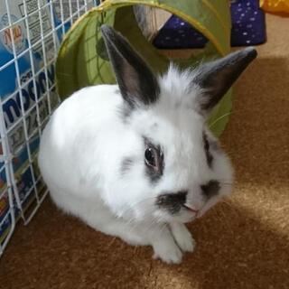 ウサギの里親さんを募集してます