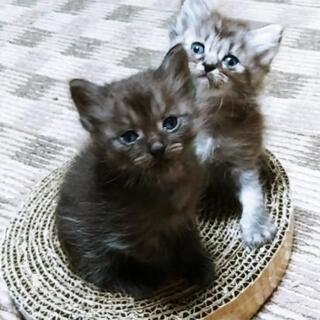 ふわふわコロコロの子猫
