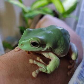 少ないカエルの情報を皆で交換したい