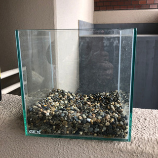 gex 20cmキューブ水槽