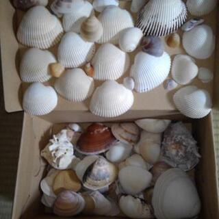 常夏気分👍貝殻🐚