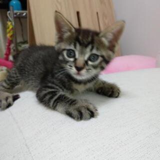 とあるお宅の裏庭で保護された若い猫さんが妊婦猫で飼えないとの事で...
