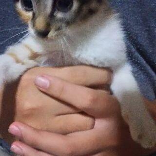 生後2ヶ月の三毛猫姉妹🐱