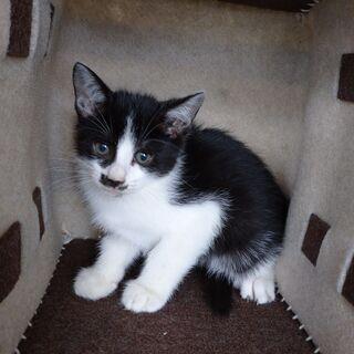 3か月ほど前に生まれた、可愛い子猫です。