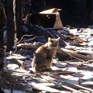 家と飼い主をなくした猫ちゃんを助けて下さい!