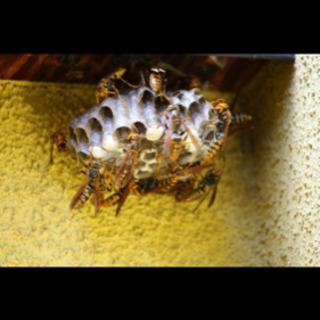 蜂の巣にお困りの方