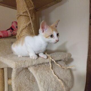 生後3か月くらいの保護猫ちゃんの里親さん募集♪