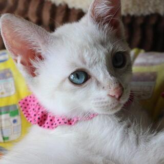ブルーアイの可愛いあぴるちゃんです