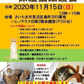 11/15(日)ハレノテラス保護猫譲渡会