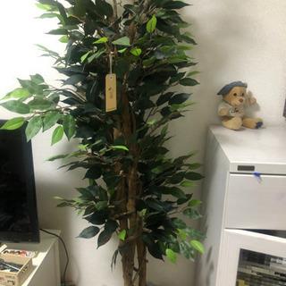 観葉植物(造花) 定価¥16000
