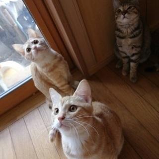 ★一旦停止します★2020年6月ごろ生まれ子猫3匹、母猫