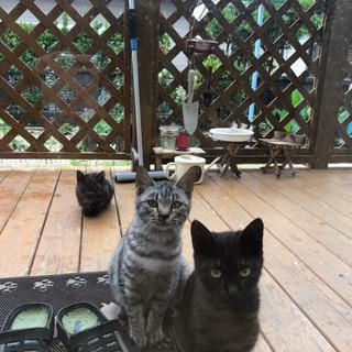 里親募集 灰色 (黒猫2匹決まりました✨感謝✨)