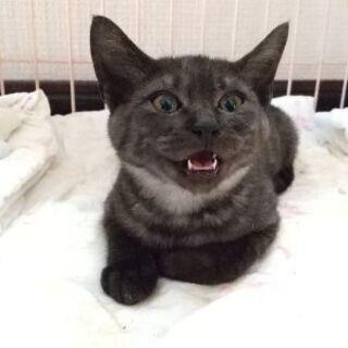 【4ヶ月のオスの仔猫】