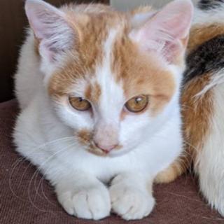 母猫と子猫の里親さん募集です