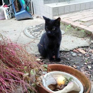 黒子猫の里親募集