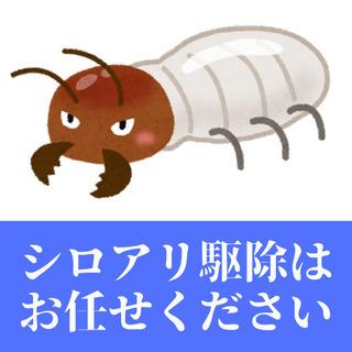 【無料点検あり!】さいたま市内のシロアリ駆除のオトモに!最短即日...